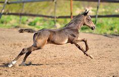 Horse - photos - equestrian.ru