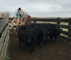 Sorting cows in the alley. Cowboy Horse, Cowboy And Cowgirl, Cattle Drive, Western Riding, Home On The Range, Ranch Life, Cowgirls, Personal Photo, Cows