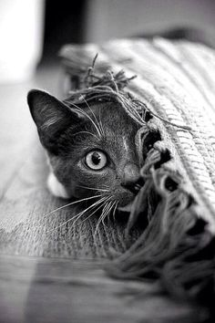 ♔ It's a cats world, kitty, kitten, killing, pet, cute, nuttet, sweet, adorable, playing hide and seek, haha, precious, furry, photo b/w. #CatPhotography