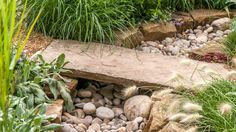 The Drought Garden at RHS Hampton Court Palace Flower Show Hampton Court Flower Show, Rhs Hampton Court, The Hamptons, Palace, Xeriscaping, Explore, Garden, Flowers, Chelsea