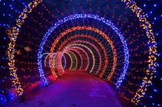 Green Bay Garden Of Lights Captivating Doorway To The Holidays Love This Picture Green Bay Botanical Design Inspiration