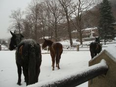 ARMY MULES AT WEST POINT. This picture is of the three mules in their paddock at the Vet   clinic at West Point NY. Raider, General Scott and Rager II (smaller black mule).       Courtesy: Greg Krenzelok, U.S. Army Veterinary Corps Preservation Group, Researcher &   Historia (USA).