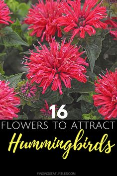 16 Perennials That Attract Hummingbirds to Your Garden! – Kudos Yellow Agastache Perennials for Hummingbirds – Kudos Yellow Agastache Kudos Yellow Agastache has tightly-packed Hummingbird Plants, Garden Shrubs, Flower Garden, Vertical Herb Garden, How To Attract Hummingbirds, Beautiful Flowers Garden, Types Of Herbs, Perennials, Home Vegetable Garden