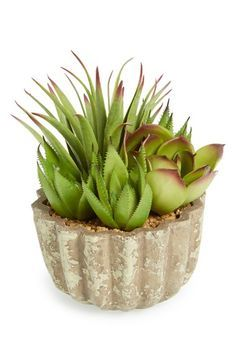 ALLSTATE 'Succulent Garden' Planter available at #Nordstrom