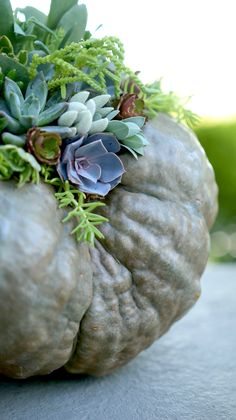 Nothing says fall more than a pumpkin centerpiece with succulents! And it's easy to make too.