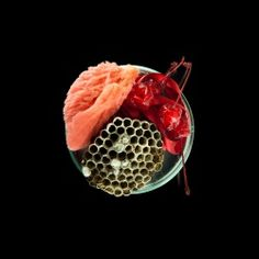 ART+Science  Suzanne Anker Vanitas in a Petri Dish