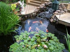 Best ideas about Backyard Koi Pond . Save or Pin Raised Formal Backyard Koi Pond Now. Fish Ponds Backyard, Outdoor Ponds, Backyard Water Feature, Koi Ponds, Backyard Aquaponics, Tropical Backyard, Garden Ponds, Backyard Privacy, Garden Oasis