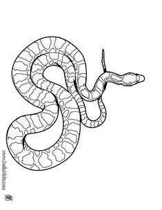 Snake Coloring Pages. Boa Snake Coloring Pages Hellokids Page Source Washer With Agitator Lg Oe Code Washing Machine Parts Deodorize Samsung Sink Wattage High Efficiency Vintage Collectors Dogs Ge Makes Animal Coloring Pages, Snake Drawing, Easy Drawings, Outline Art, Mandala Coloring Pages, Pokemon Coloring, Color, Snake Coloring Pages