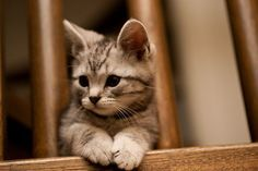 (via)   The Cutest of the Cute on We Heart It.