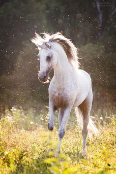 Country Summer: Horse Dancing in the Summer!