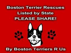 Boston Terrier Rescues Listed by State Boston Terrier Rescue, Boston Terrier Love, New Puppy, Puppy Love, Boston Terrior, Boston Art, Toy Fox Terriers, Daisy Mae, Bully Dog