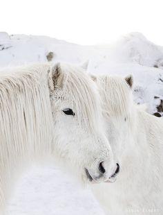 such cute lil' fluffy ponies!