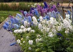 TOP 10 COTTAGE GARDEN PLANTS AND FLOWERS FOR YOUR ENGLISH COUNTRY GARDEN.Pink Valerian,Allysum,Lavender,Wallflowers,Old Fashioned Roses,Silene,Delphiniums,Foxglove,Climbing Roses,Canterbury Bells.