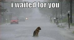 Your pet is out there waiting, go adopt em, and don't make them wait