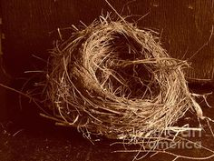 'Bird's Nest Sepia' by Bill Tomsa
