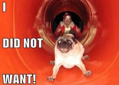 Hilarious images of the day, 64 images. Pug Slide