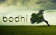 Google Image Result for http://vaipui.files.wordpress.com/2012/01/bodhi-linux-nature-green-tree-wind.jpg