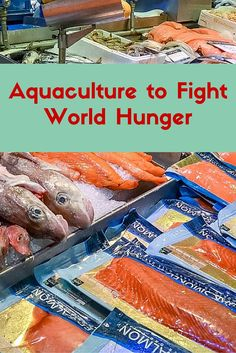 #Aquaculture is one of the leading sectors of #agriculture that can address the…