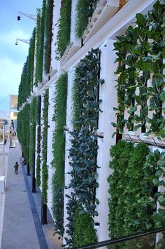 The walls grow all sorts of garden vegatables