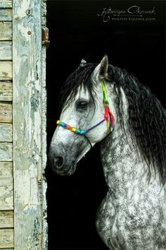 Katarzyna Okrzesik has an eye for creating engaging equine portraits. She travels to stables far & wide to photograph these majestic horses All The Pretty Horses, Beautiful Horses, Animals Beautiful, Cute Animals, Hello Beautiful, Horse Photos, Horse Pictures, Majestic Horse, Draft Horses