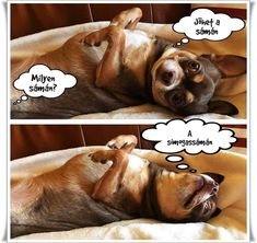 Rottweiler, Dog Pictures, Funny Pictures, Funny Animals, Cute Animals, Funny Memes, Jokes, Everything Funny, I Love Dogs