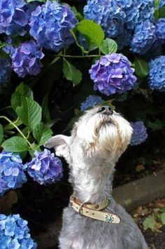 Taking time to smell the flowers by greta