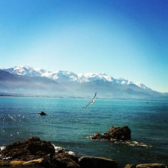 Kaikoura, New Zealand - swam with dolphins and had close encounters of the albatross kind