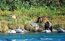 Dog Sledding and Bear watching