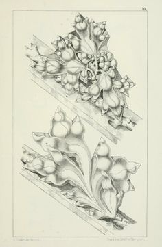 Designs for Gothic ornaments & furniture, 1854. Moldings with grape vines. [Open Library, archive.org]