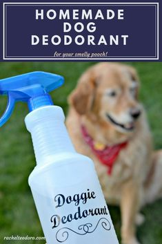 Homemade Dog Deodorant for your Smelly Pooch
