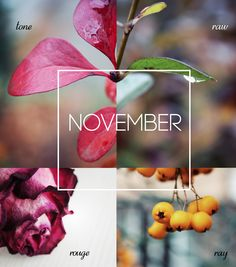 Welcome November, Sweet November, November Month, November Backgrounds, November Wallpaper, November Images, New Month Quotes, Its My Birthday Month, Holiday Pops