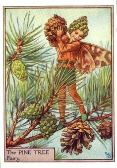 Pine Tree Flower Fairy Vintage Print by Cicely Mary Barker, first published in London by Blackie, 1940 in Flower Fairies of the Trees. Cicely Mary Barker, Tree Illustration, Fantasy Illustration, Flower Fairies, Winter Fairy, Elves And Fairies, Vintage Fairies, Fairy Art, Illustrators