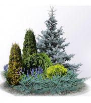 garden shrubs for colour Landscape Plans, Garden Landscape Design, House Landscape, Evergreen Landscape, Evergreen Garden, Garden Shrubs, Shade Garden, Herb Garden, Landscape Arquitecture