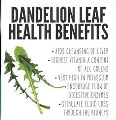 Healing Herbs, Medicinal Plants, Natural Healing, Natural Medicine, Herbal Medicine, Dandelion Leaves, Dandelions, Dandelion Plant, Dandelion Benefits