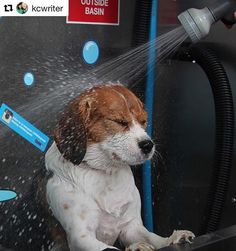 K9000 dog wash demonstration k9000 dog wash pinterest dog tru blu dog wash is australias leading diy dog wash manufacturer our market leading k9000 solutioingenieria Image collections