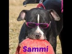 Sammi: smart, playful, loving and more!