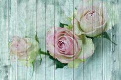 Vintage, Wood, Rose, Shabby Chic