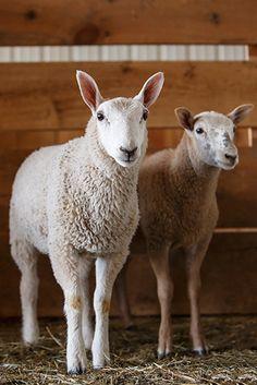 FARM FRESH! New Animal Images from Barbara O'Brien by Barbara O'Brien, via Behance