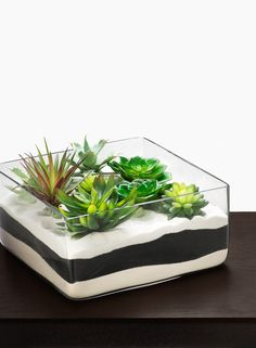 12 x 12 x 6in Square Glass Bowl Wedding Centerpiece Floating Flowers Candles Display Lush Succulent Plant Garden Fine Natural Sand