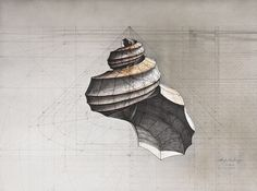 45° Cone Shell by Rafael Araujo http://colossalshop.com/products/45-cone-shell