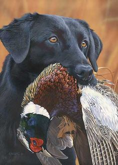 Prize Possession-Black Lab by Scot Storm : Wild Wings