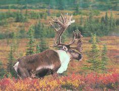 Cartoon+Moose+Wallpaper-725512.jpg (1024×789)