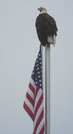 View full sizeUdo LindikoffUdo Lindikoff of Portland photographed a patriotic bald eagle from his vacation home in Pacific City on the Nestucca River.