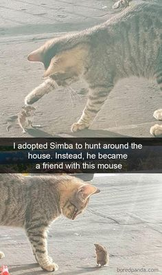 Breaking Mews: Fresh Caturday Memes Now Available - World's largest collection of cat memes and other animals Cute Kittens, Cats And Kittens, Cute Funny Animals, Cute Baby Animals, Funny Cute, Funny Dogs, Cute Baby Pictures, Funny Animal Pictures, Humour Snapchat