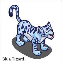 Blue Tigard