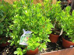 Las mejores plantas para terrazas con sol jardin pinterest - Plantas terraza mucho sol ...