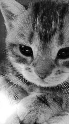 sooo cute !!