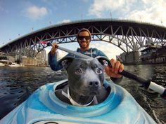 ...after imaging the air whistling through his ears on the back of a motorcycle, Calvin was ready to once again imagine a water voyage - this time exploring far-and-wide via kayak (with a doggie life vest of course)...
