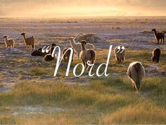 Le nord du Chili  http://www.mayurutour.com/it/fotos/59/flora-y-fauna-del-norte-de-chile-altiplano-y-desierto.htm