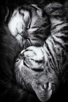 Snuggle~♛